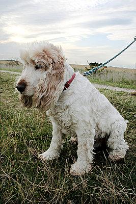 Trauriger Hund - p4860080 von anneKathringreiner