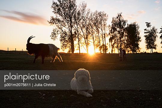 p301m2075611 von Julia Christe