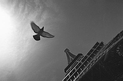 France, Paris, Eiffeltum, dove flying, low angle view - p300m879484 by Tom Hoenig