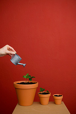 Pflanzen gießen - p4540382 von Lubitz + Dorner