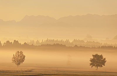 Morning fog in the country of Berchtesgaden - p533m1573837 by Böhm Monika
