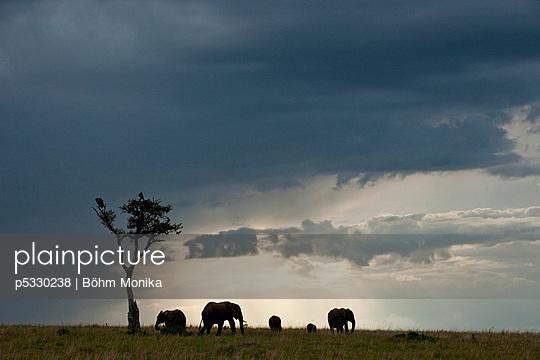 Eelefanten im Gegenlicht - p5330238 von Böhm Monika