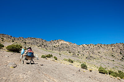Old Man Riding Mule In The Atlas Mountains - p1272m2142530 by Steffen Scheyhing