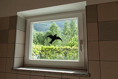 Bird of prey silhouette window sticker  - p1293m1193498 by Manuela Dörr