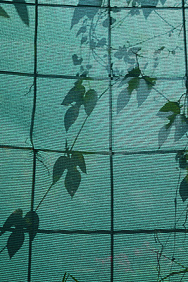 Plant shadows on fence panel - p1580m2210126 by Andrea Christofi