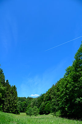 Meadow between trees under blue sky - p427m2206485 by Ralf Mohr