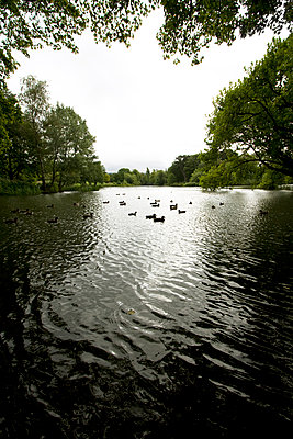 Lake in a park - p1121m1083799 by Gail Symes