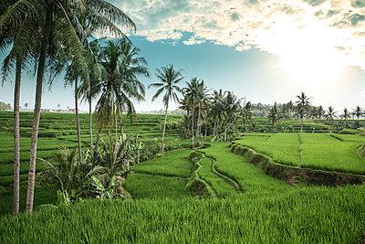 Reisfelder - p1038m1515006 von BlueHouseProject