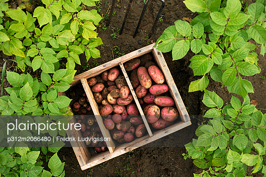 Potatoes in wooden crate - p312m2086480 by Fredrik Ludvigsson