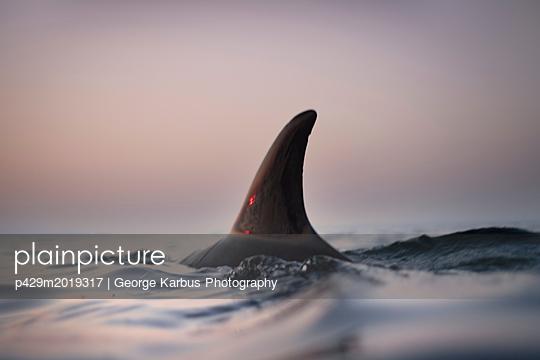 p429m2019317 von George Karbus Photography
