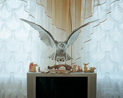 Tierpräparat - p1205m1463996 von Jan Brykczynski