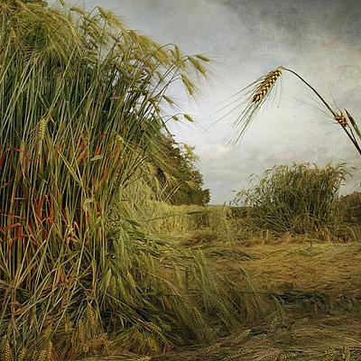 Field Study #32 - p1633m2284232 by Bernd Webler