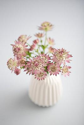 Zarte Blüten - p454m1030930 von Lubitz + Dorner