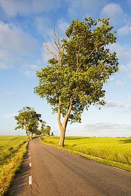 Sweden, Skane, Krageholm, country road in rural scene - p352m1349317 by Gustaf Emanuelsson