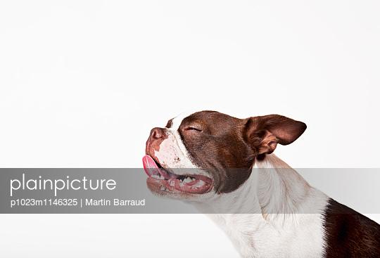p1023m1146325 von Martin Barraud