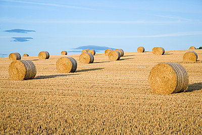 Hay bales in a field - p92410114f by Image Source