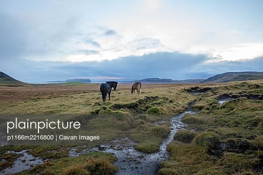 p1166m2216800 von Cavan Images