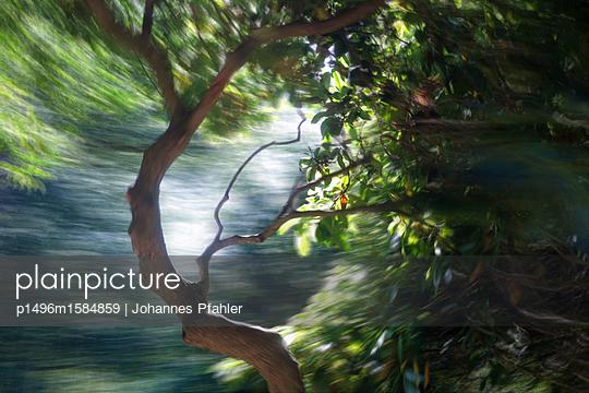 Natur - p1496m1584859 von Johannes Pfahler