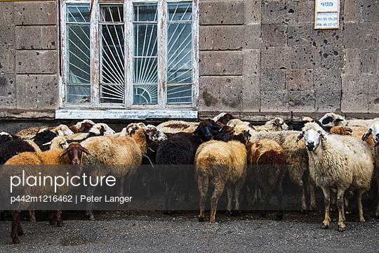 p442m1216462 von Peter Langer