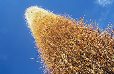 Long Cactus - p1072m829207 by Mike Steel