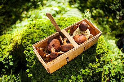Pilze im Wald - p1386m1445762 von beesch