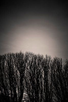 Leafless - p248m989784 by BY