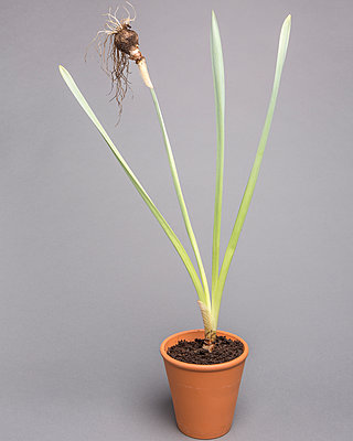 Potted plant - p1059m2124819 by Philipp Reiss