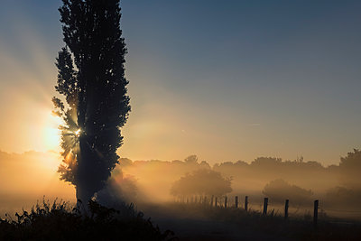 Sunrise with morning fog - p739m1169093 by Baertels