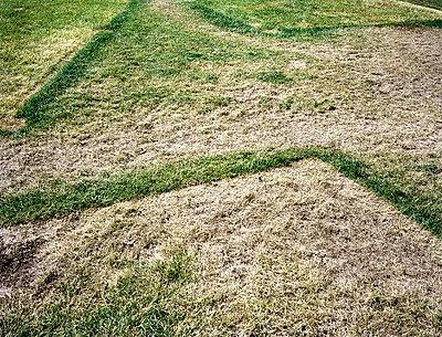 Grasflächen - p7510028 von Dieter Schwer