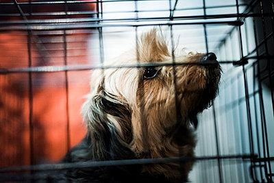 Animal shelter - p1076m987604 by TOBSN