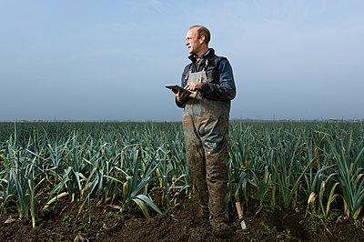 Harvesting leek - p1132m952139 by Mischa Keijser