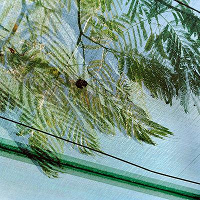 Grünes Netz - p949m658302 von Frauke Schumann