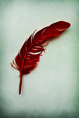 Red feather - p1228m2125849 by Benjamin Harte