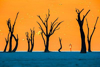 Africa, Namibia, Deadvlei, Namib desert, dead acacia trees - p651m2006442 by Francesco Riccardo Iacomino