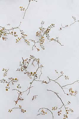 Snowcapped branches - p756m2253143 by Bénédicte Lassalle