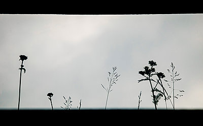 Plants outside the window - p382m2254518 by Anna Matzen