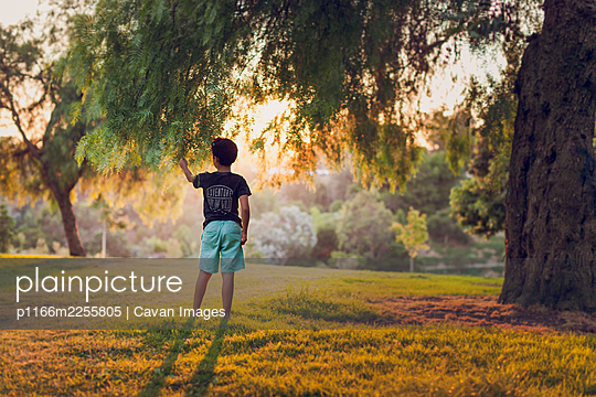 Boy touching a branch of a back lit pepper trees in the afternoon. - p1166m2255805 by Cavan Images