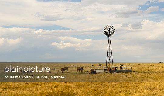 p1460m1574612 von Kuhns, Matthew