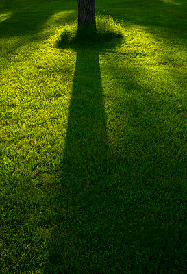 Shadow of tree trunk on grass - p1427m2186383 by Tetra Images
