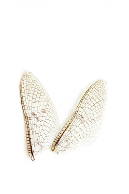 Libellenflügel - p4500616 von Hanka Steidle
