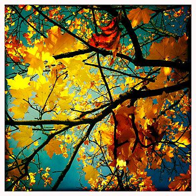 Tree canopy - p979m909886 by Jordan photography