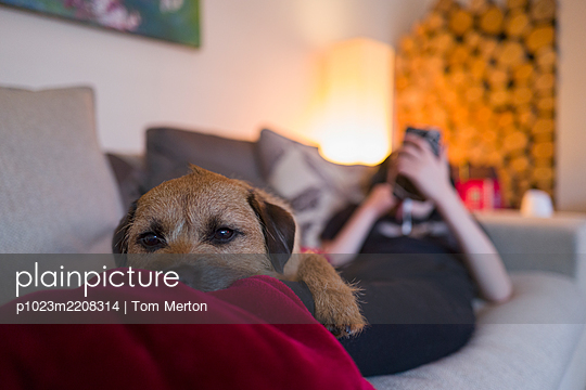 Portrait cute dog laying on boy on living room sofa - p1023m2208314 by Tom Merton