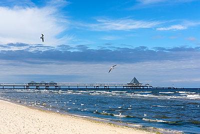 Germany, Usedom, Heringsdorf, beach, seagulls and pier - p300m1205361 by Martin Siepmann