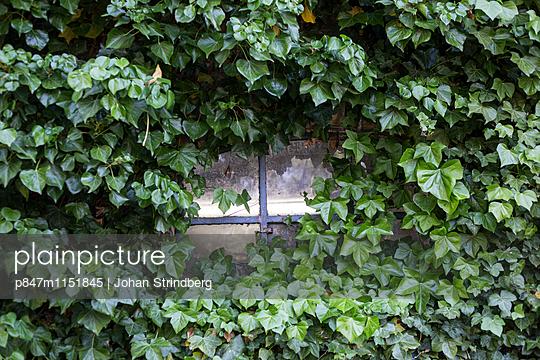 p847m1151845 von Johan Strindberg
