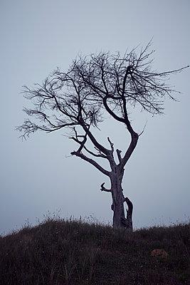 Gespenstischer Baum - p464m1196192 von Elektrons 08