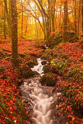 A small stream running through Charles Wood, Dartmoor National Park, Devon, England, United Kingdom, Europe - p871m807586 by Julian Elliott