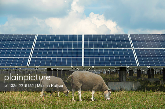 Solar energy and sheep - p1132m2215152 by Mischa Keijser