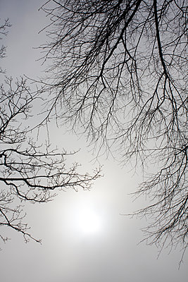 Winter branches against a foggy sky - p1121m1111515 by Gail Symes