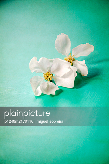 Apple Blossom on green table top - p1248m2179116 by miguel sobreira