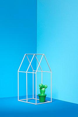 Kleiner grüner Kaktus - p237m1162753 von Thordis Rüggeberg